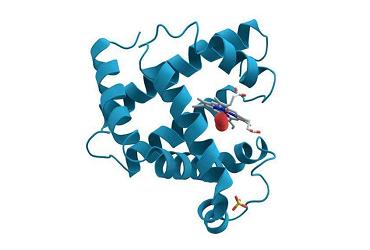 蛋白质胶点鉴定